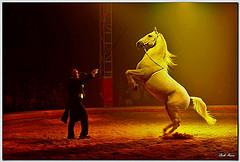 La classica scena da circo