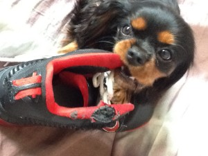 Divertente la scarpa