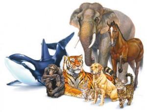 protezione animali nelle scuole