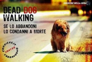 cane abbandonato in autostrada