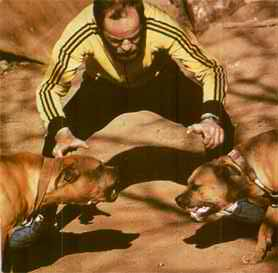cani combattenti