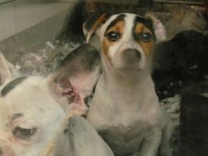 cuccioli in vetrina
