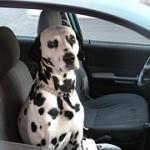 quando salgo in macchina il dvertimento è assicurato