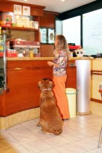 perchè un cane educato non può entrare?