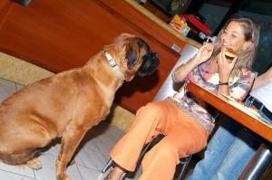 Cani al bar