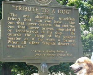 elogio al cane