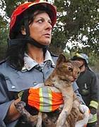 La gattina Thelma salvata dai vigili del fuoco