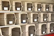 Niente sedili all'interno dell'aereo, solo le gabbie per i passeggeri a quattro zampe