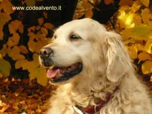 Lola autunno