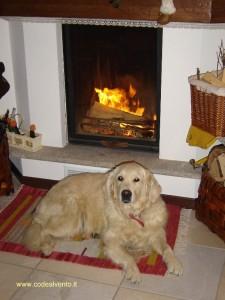 Lola inverno