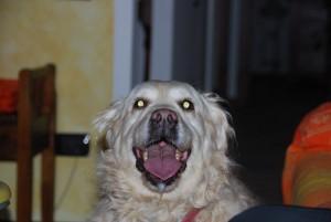 Gli occhi di Lola