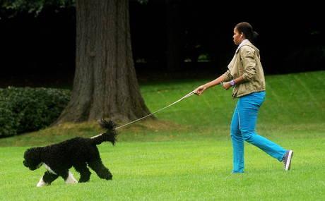 Sulle orme dei nostri cani guinzaglio - Portare il cane al canile ...