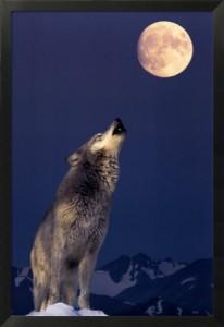 ululato alla luna