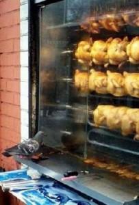 piccione preoccupato