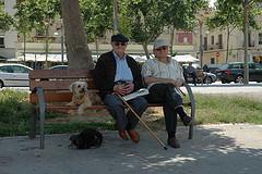 """ogni conoscenza, la totalità di ogni domanda e di ogni risposta, è contenuta nel cane"""" (Franz Kafka)"""